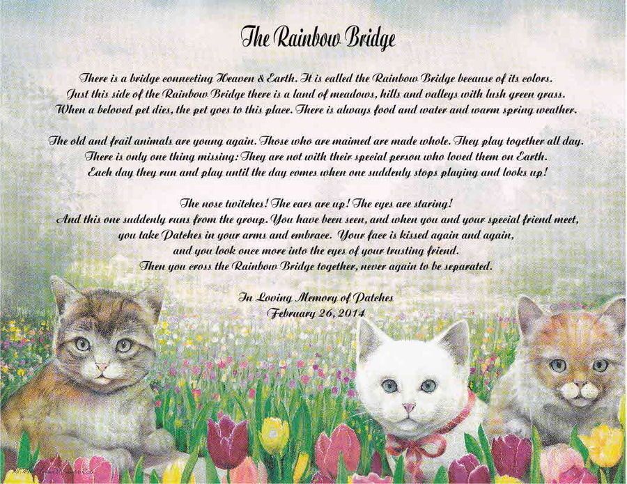 My 15 year old cat died today | Page 3 | Sherdog Forums